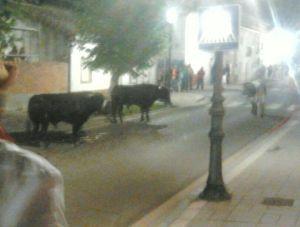 Foto tomada en Aldeamayor de San Martín